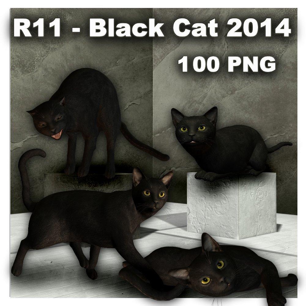 R11 - Black Cat 2014.jpg