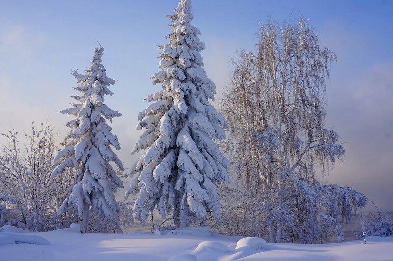 в морозную зиму.jpg