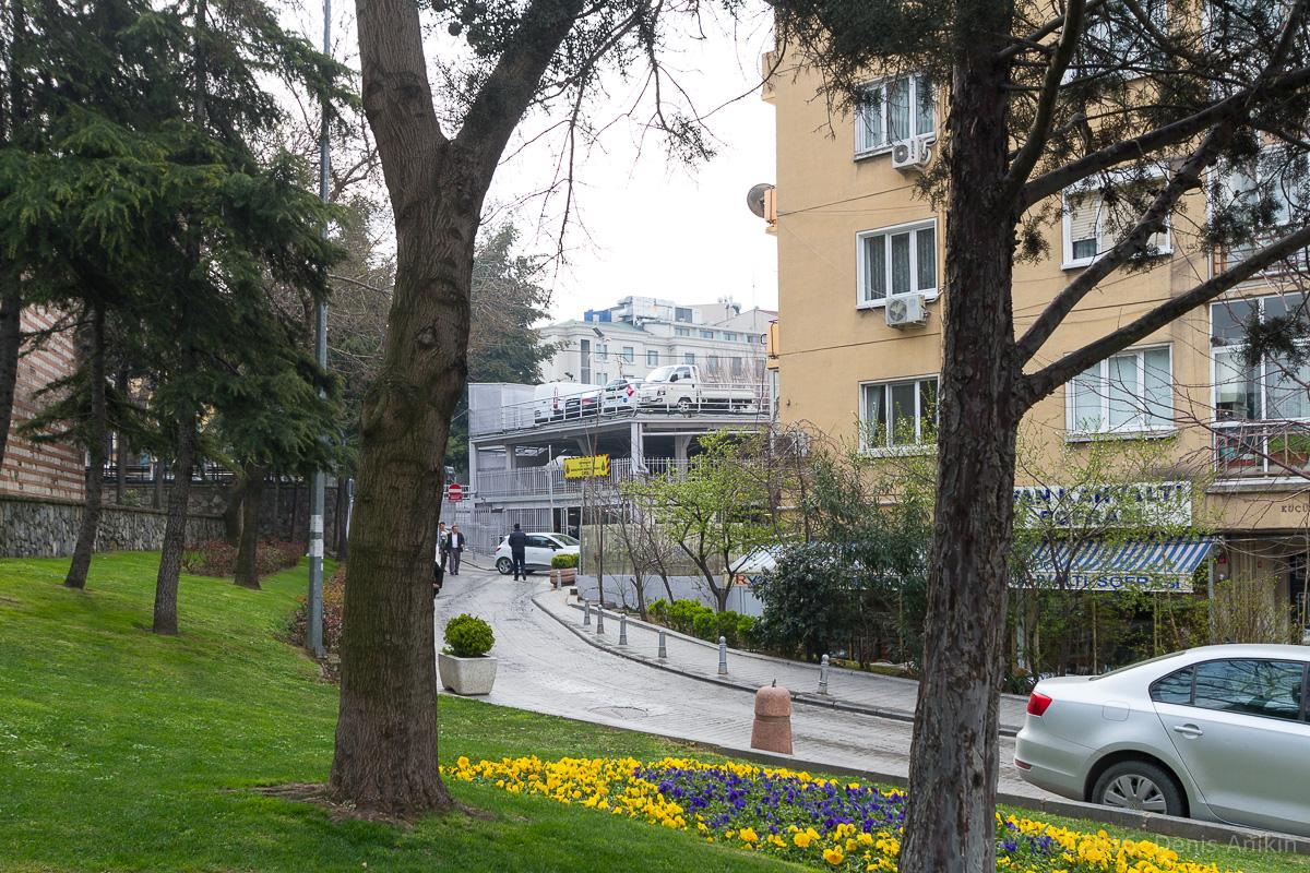Тюльпаны Стамбул фото 6