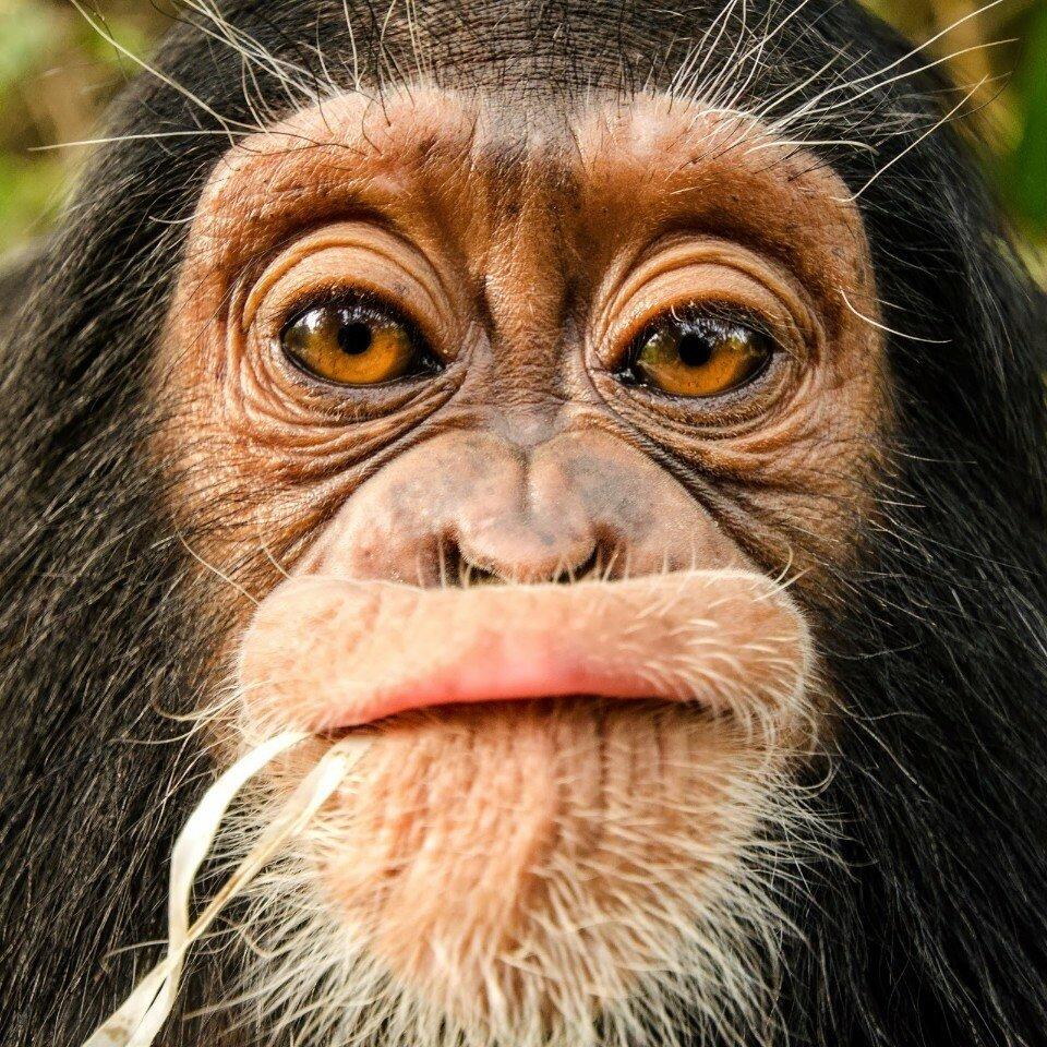 является картинки прикольных мордочек животных вот поп-групп