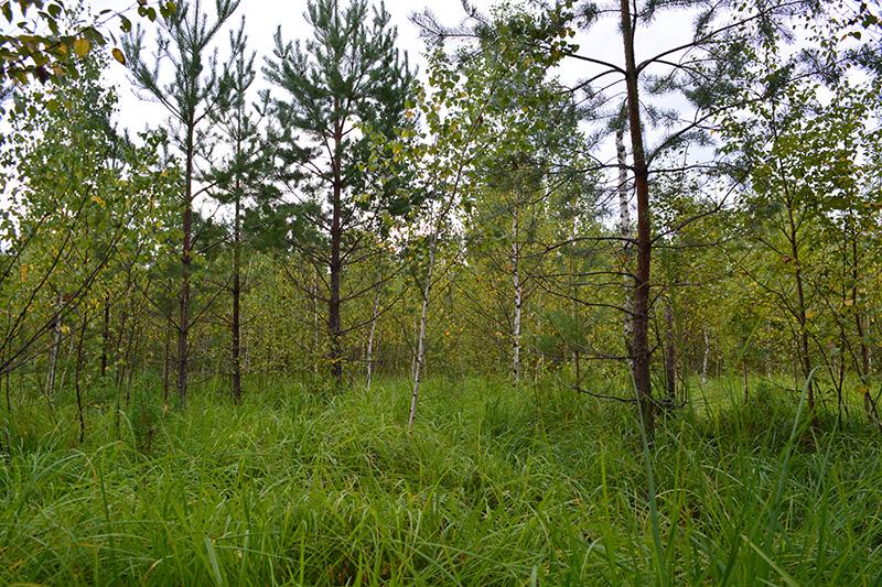 леса 6.jpg