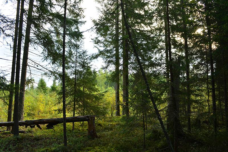 леса 17.jpg