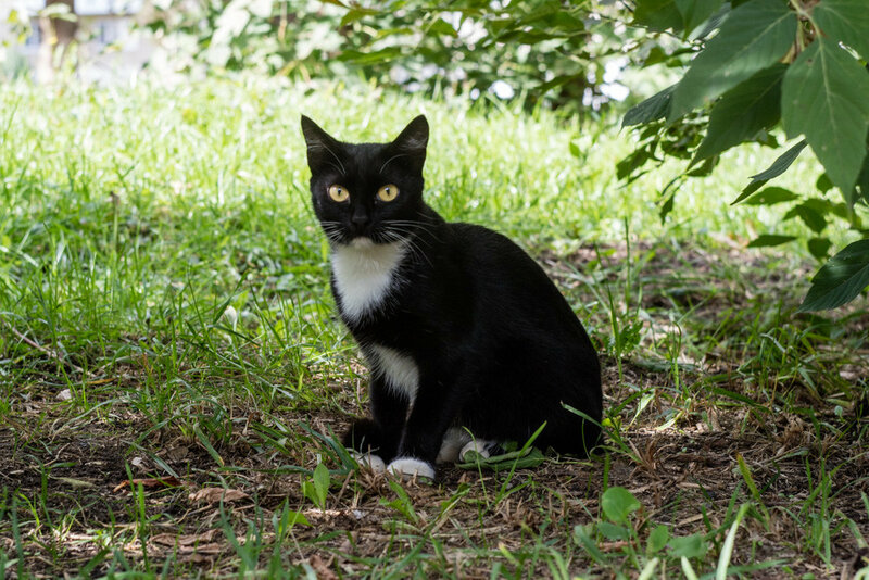 кошки с желтыми глазами не редкость, вот одна из них