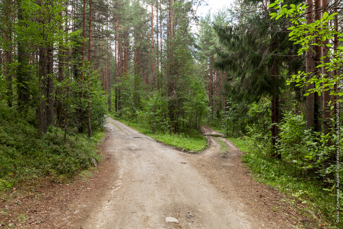 карелия лес