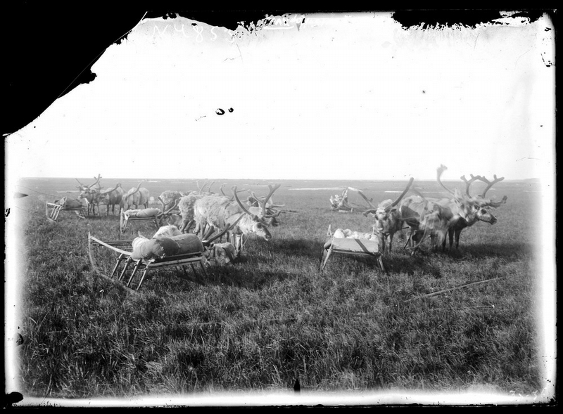 Siberia-Century-100-year-old-photos-reindeer.jpg