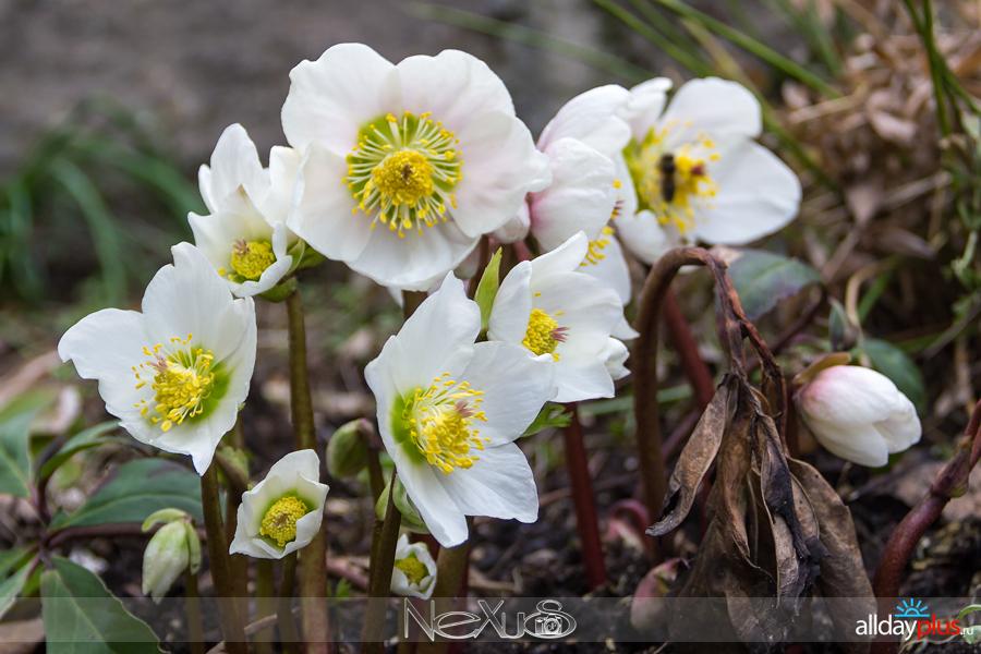 Я люблю все цветы, выпуск 223 | С Праздником 8 Марта !