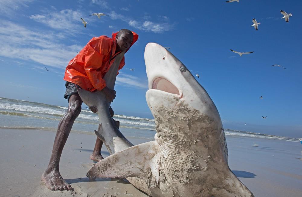 прикольные фото с акулами меньше диаметр