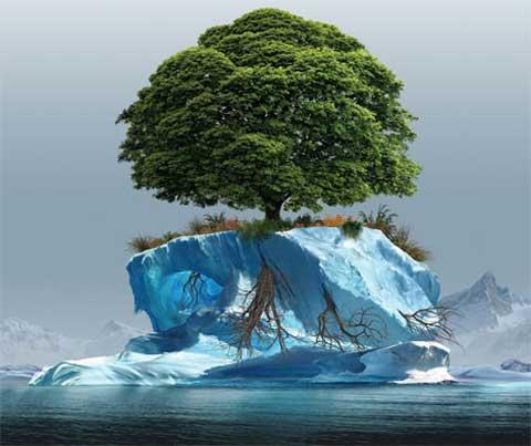 14 мая Всероссийский день посадки леса. Изменение климата