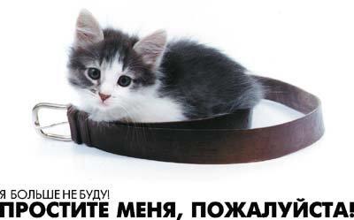 Простите меня пожалуйста! Котенок и ремень открытки фото рисунки картинки поздравления