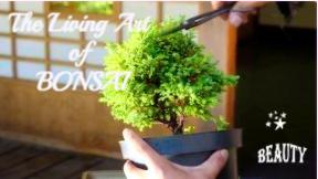 bonsai_02-42-50.png