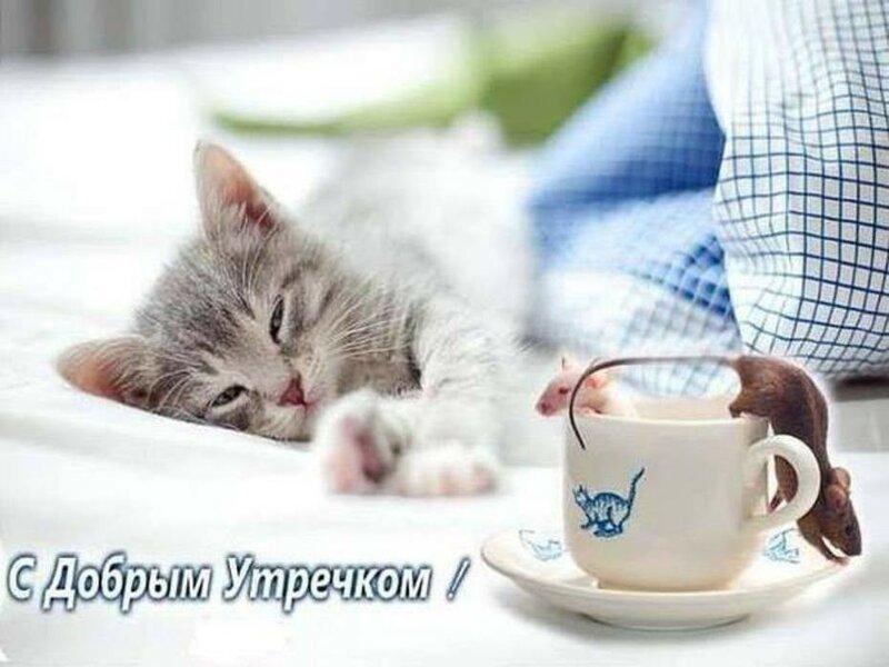 Фото с кошками и надписями доброе утро, кубы открытки котятами