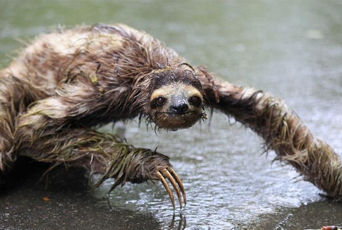 8. Ленивец пробовался на роль Фредди Крюгера, но оказался уж слишком страшным.