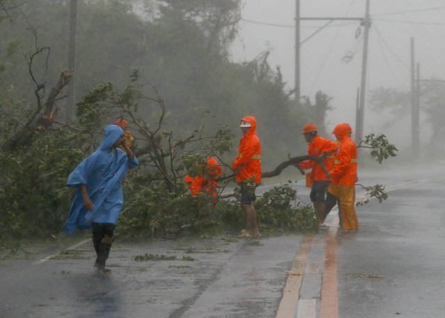 Government workers remove debris from toppled trees at the height of Super Typhoon Haima that lashed