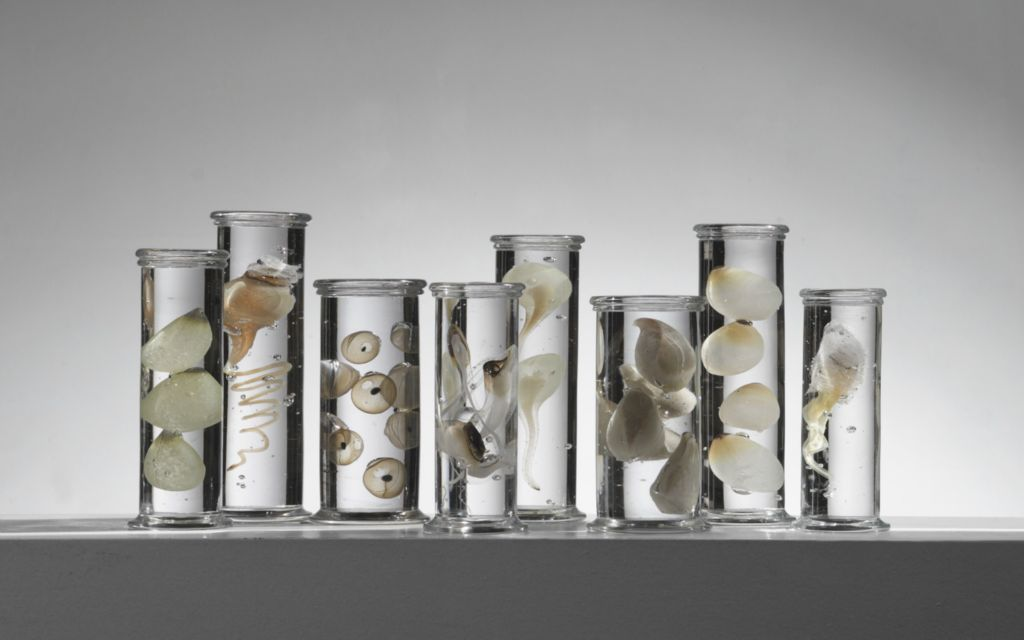 Exquisite Marine Life Specimens Imagined in Glass by Steffen Dam