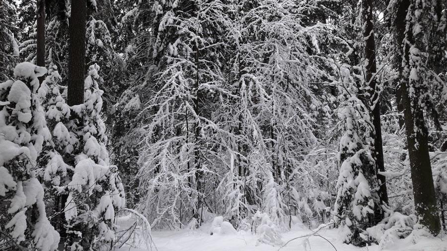 Зима в Крыжовке