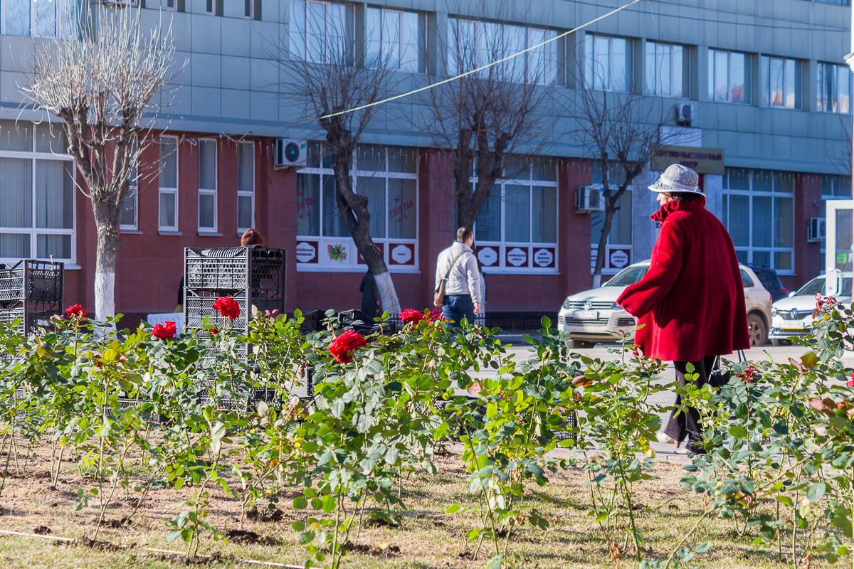Волжская цветы фото 5