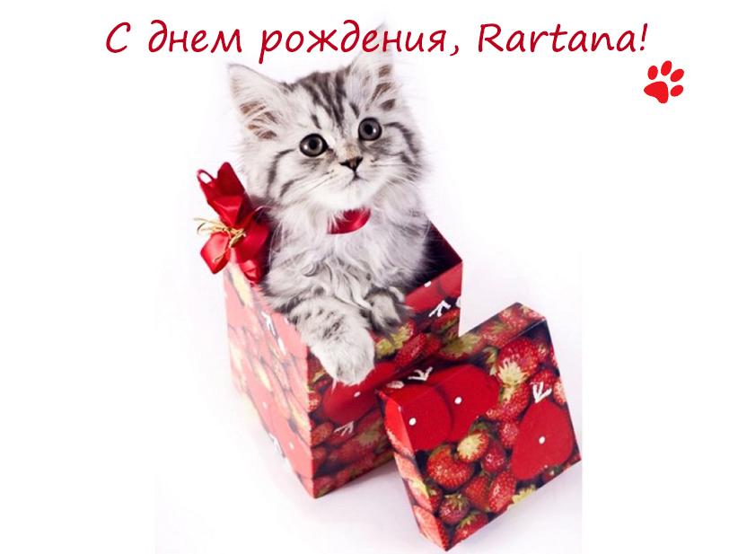 Подарок котику с днем рождения