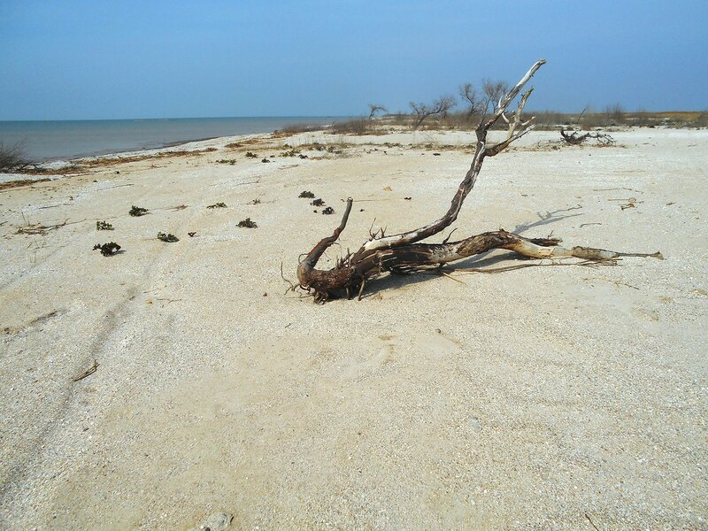 Оставленное на берегу ... DSCN1740.JPG