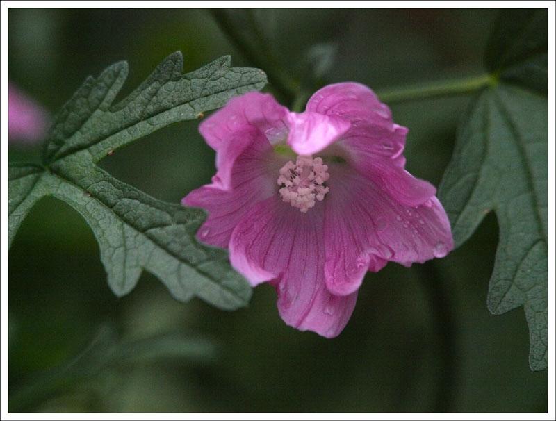 115_Flower.jpg