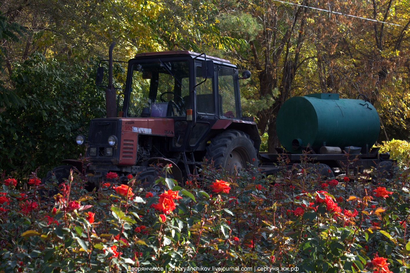 Трактор в розах - парк ВГС - 18 октября 2016