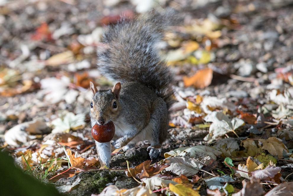 14. Тыквы поспели, Нью-Йорк, 4 октября 2016. (Фото Mike Groll):