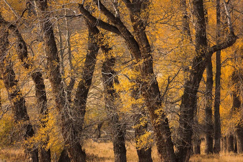 10. Утки на пруду. (Фото Terrence Bond | USA Landscape Photographer of the Year):