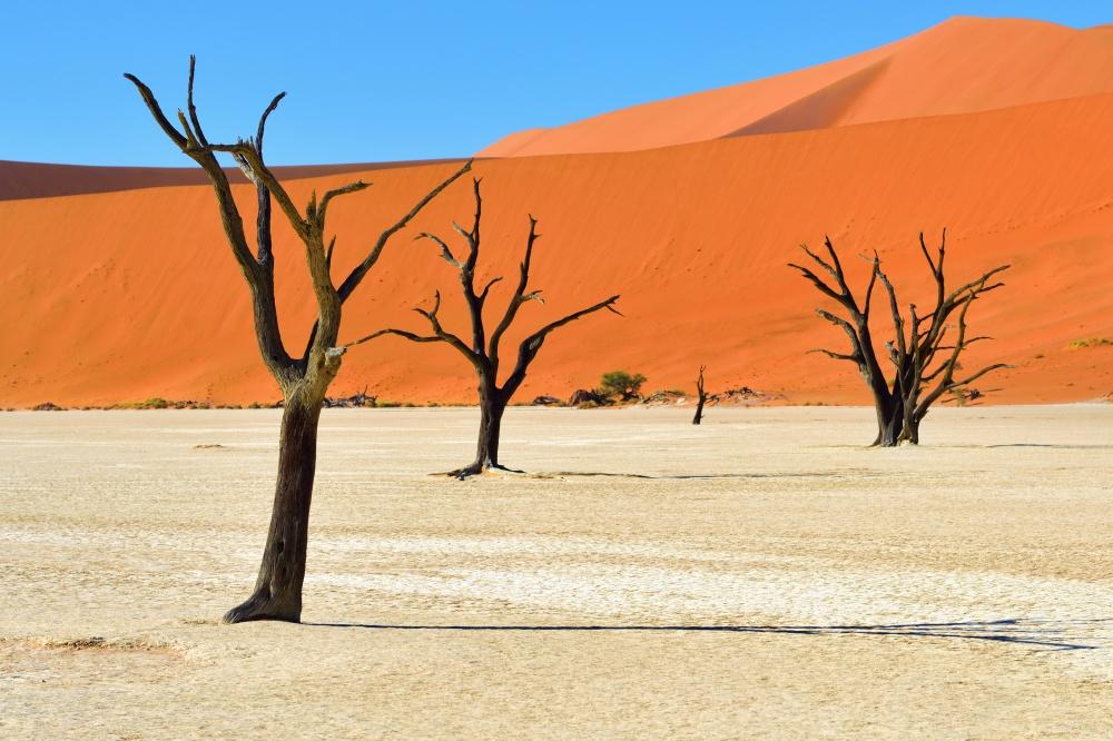 © znm666/depositphotos  Площадь этого парка составляет почти 50000кв. км— восновном пустын