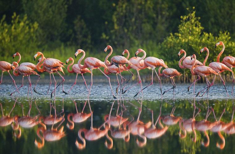 Кайо-Гуахаба занимает площадь в 107 км2. Остров знаменит своими мангровыми зарослями, живописным