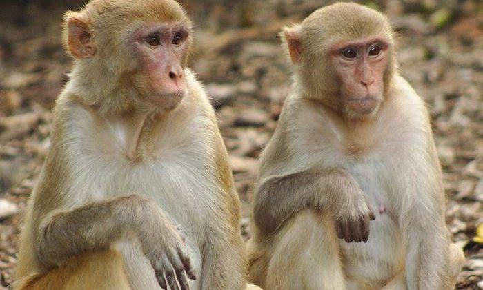 Биологи: Высокий социальный статус увеличивает иммунитет