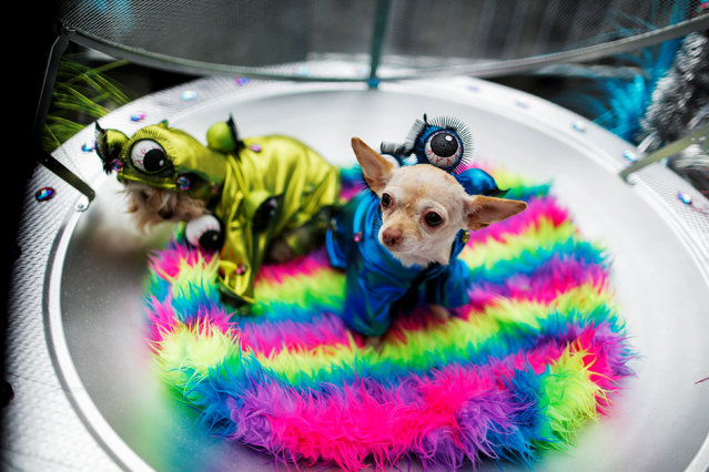 Dogs dressed as aliens take part in the annual halloween dog parade at Manhattan's Tompkins Squ