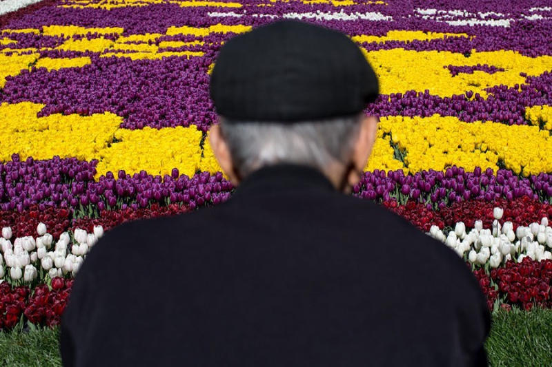 A man looks out over a tulip display in the Sultanahmet district on in Istanbul, Turkey. Every A