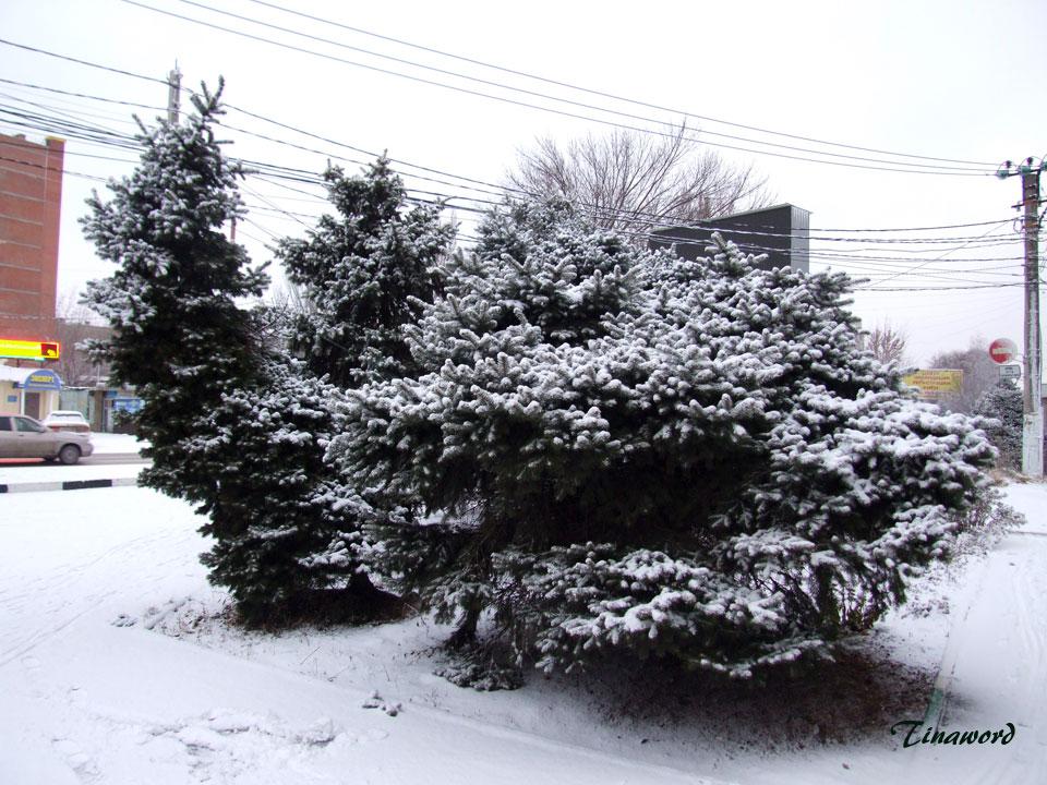Вот-и-снег-2.jpg
