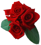 rose_PNG644.png