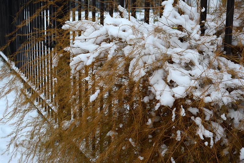 цветы в снегу 10.jpg