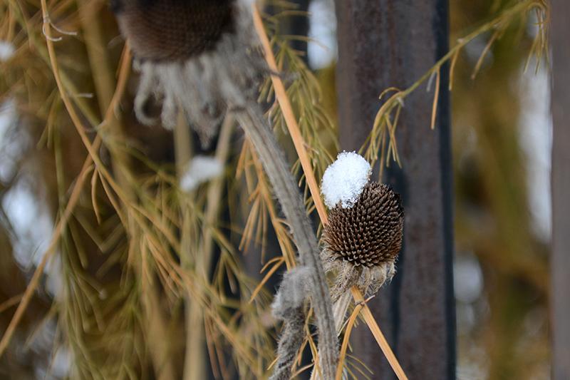 цветы в снегу 11.jpg