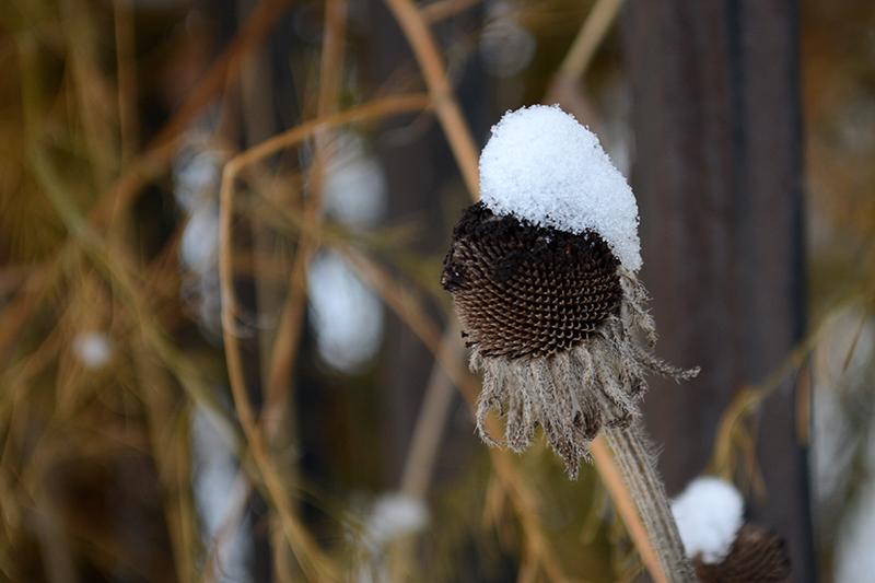цветы в снегу 12.jpg