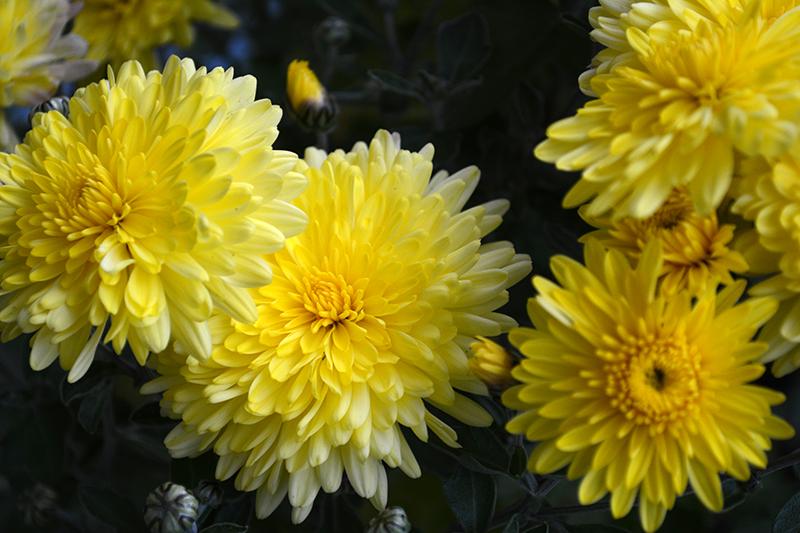 цветы дождь 2.jpg