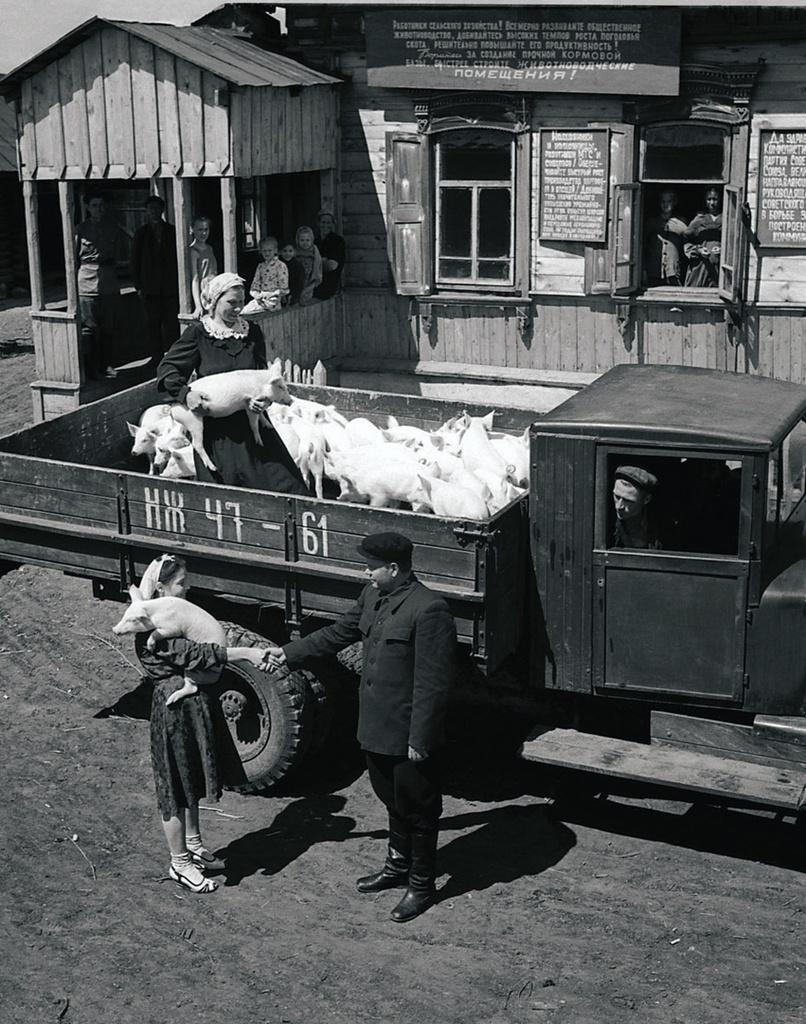 Председатель колхоза С. П. Пахомов поздравляет свинарок О. П. Урютину и Н. К. Соколову с успехами в труде и вручает премию – 30 поросят (1954)