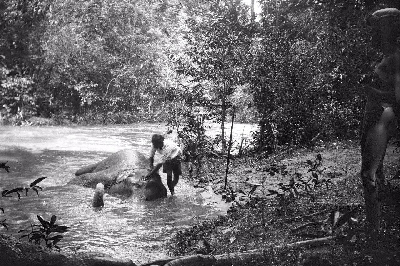 101. Помывка слона в реке Гал-Оя