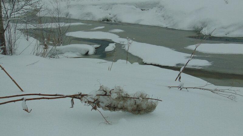 Река Витка проснулась.