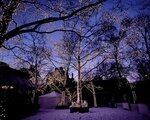 trees_garlands_party_christmas_winter_snow_42541_1280x1024.jpg