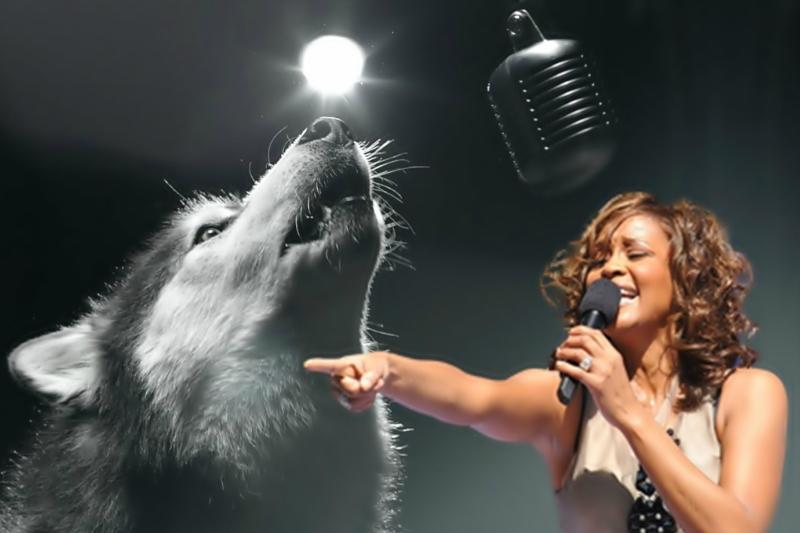 Видео   собака поет песню Уитни Хьюстон на конкурсе талантов