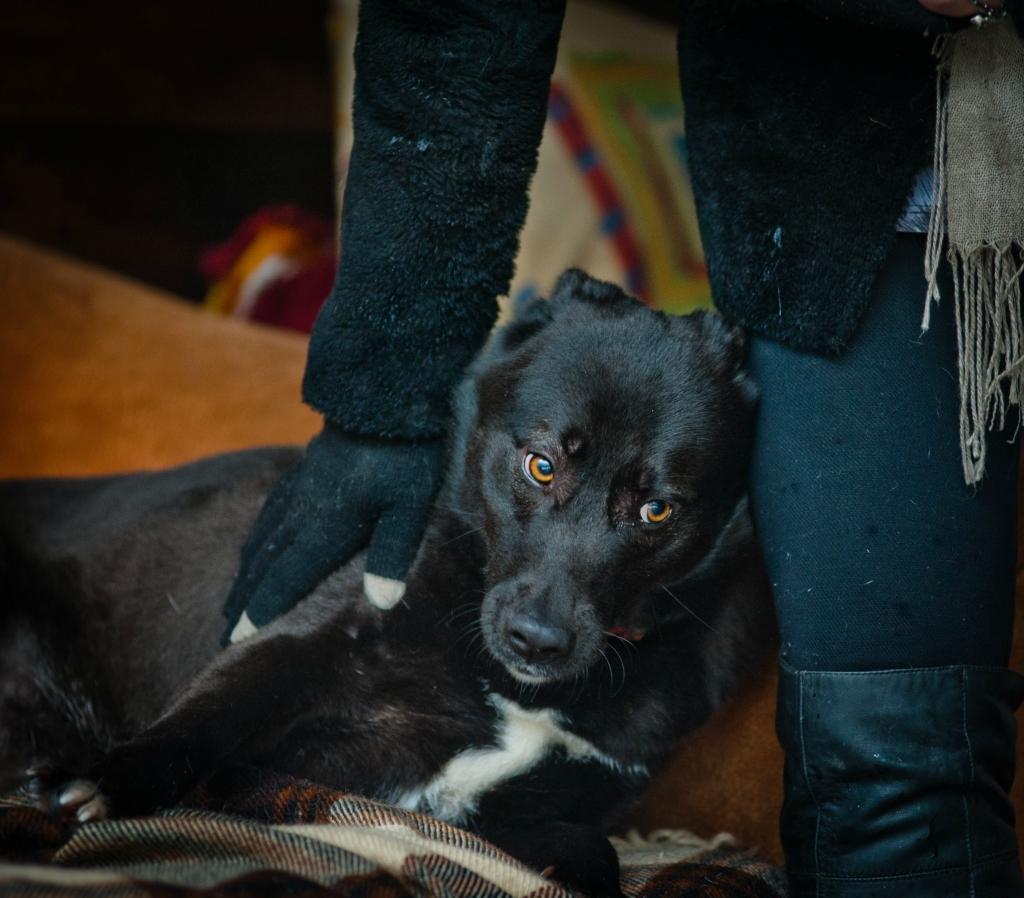 Лаура собака из догпорта