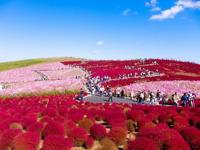 Хитачи Кайхин – парк цветов