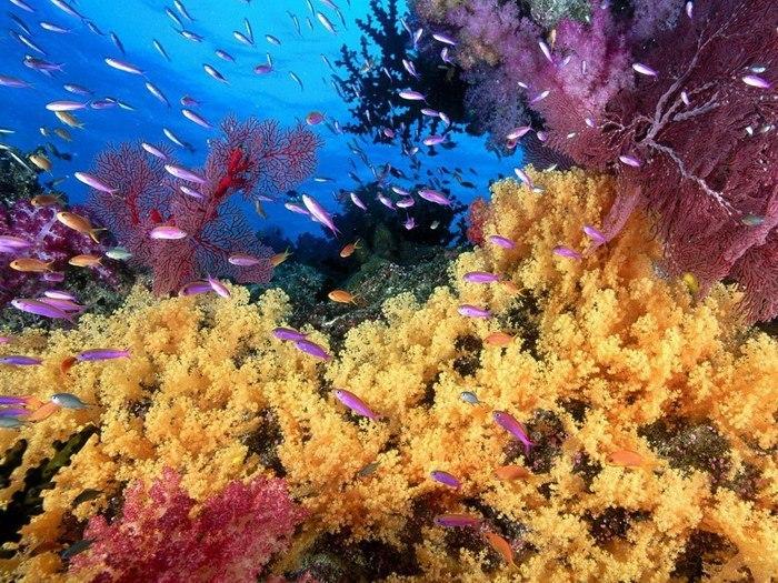 Яркий мир коралловых рифов (9 фото)
