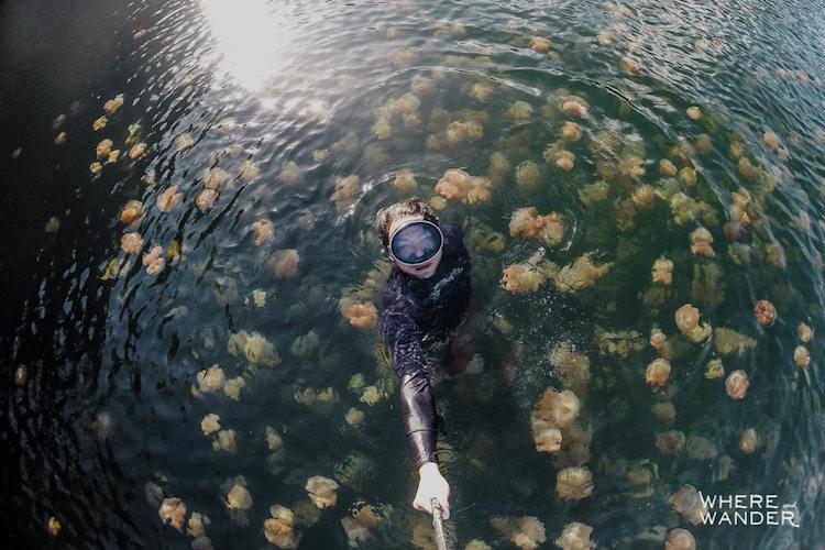 В течение дня медузы мигрируют вслед за солнцем из одной части озера в другую.
