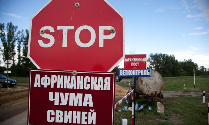 Украинских свиней косит африканская чума, асвиноводы остаются без экспортных рынков