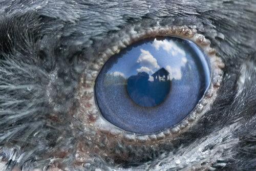Серая ворона - Corvus cornix (Corvidae)Альбом: Из жизни птиц Автор фото: Владимир Брюхов