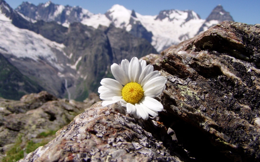 Nature_Mountains_Daisy_in_the_mountains_032456_.jpg