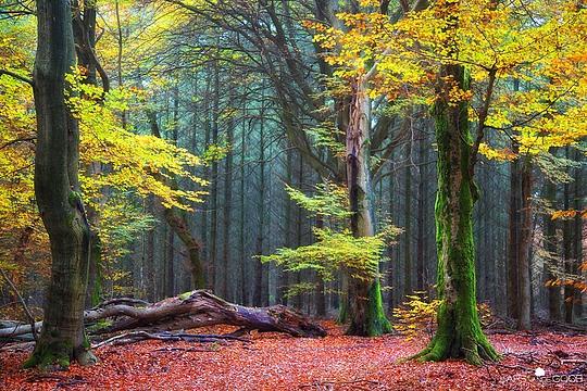 Creative Photography by Lars van de Goor